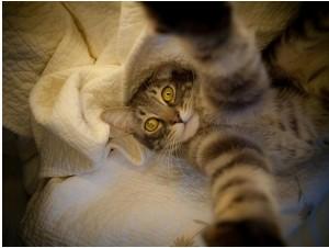 catselfie6