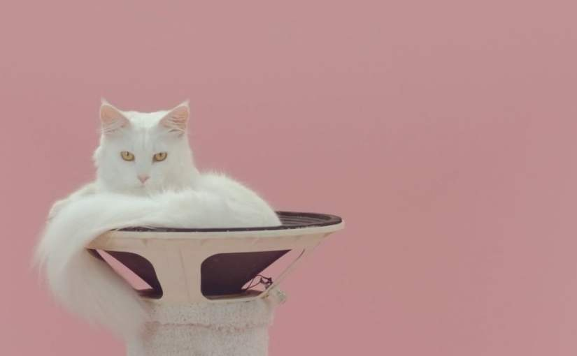 Gorgeous White Cat in Pulsating Speaker Featured in Music Video