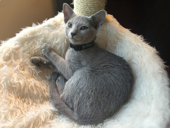 Kitten Boris