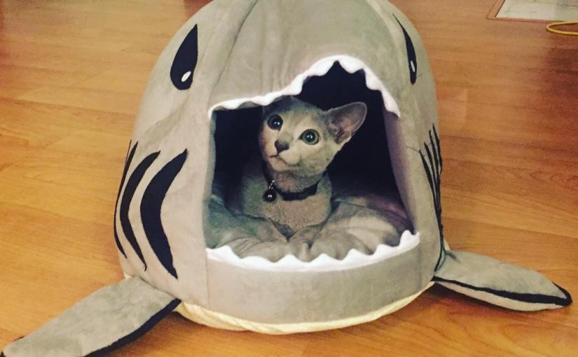 Cat or Shark?
