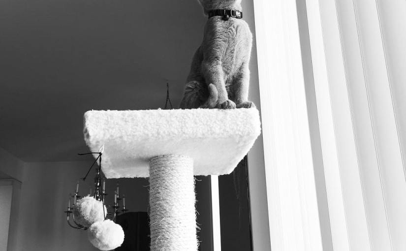 I am king of the castle