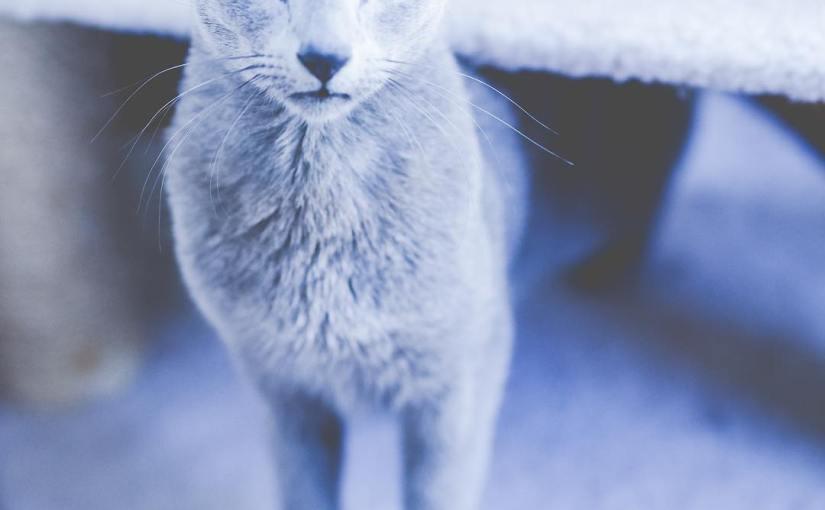 Happy National Cat Day!! 😻 Boris is not impressed