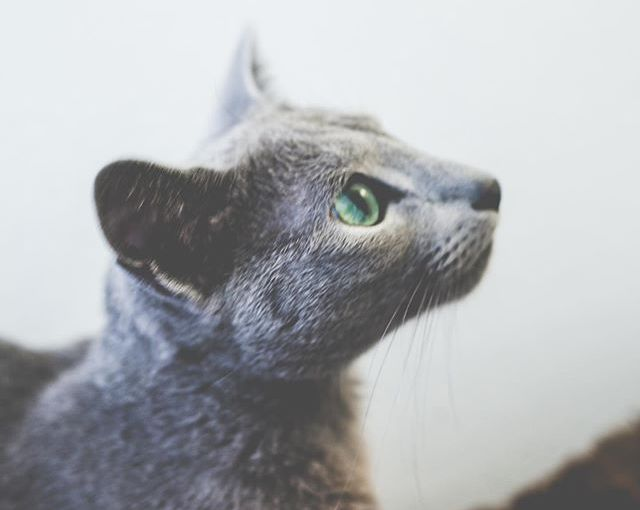 Gaze into my eyes!! 👀 #caturday