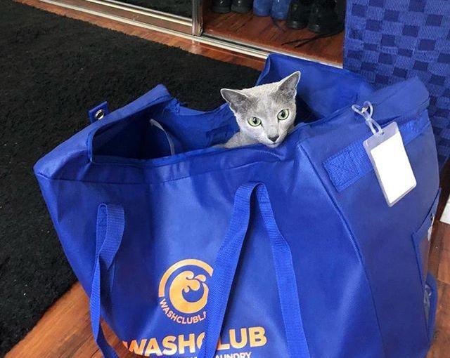 Special laundry delivery!! 🐱 #caturday #catsofinstagram #cats #cat #instacat #catstagram #meow…