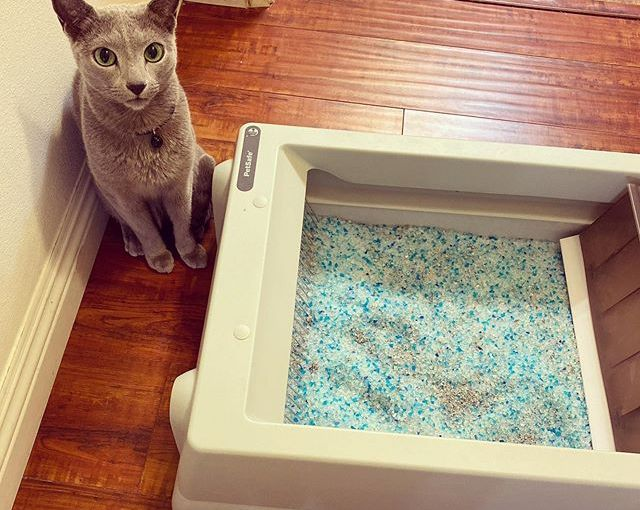 My hooman got this new @PetSafe Scoop Free Litter Box so he would never have to scoop cat litter…