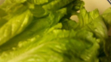 lettuce and coffee grounds