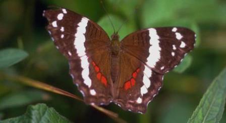 chaco rainforest