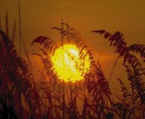 vitamin D and frailty
