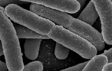 IIPS leaky gut and probiotics