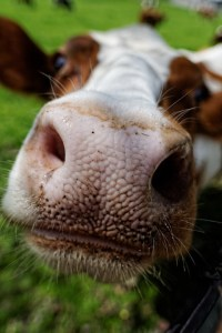 hay fever nasal irrigation
