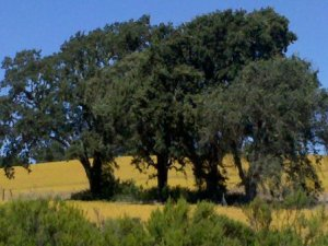 trees decrease crime