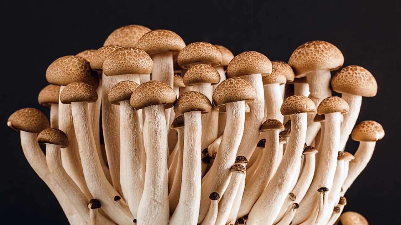 9 Mushrooms That Help Protect the Liver | Heal Naturally