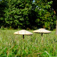 mushrooms vitamin D levels boosted with sunlight