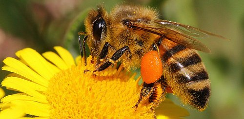 honey beats antibiotics