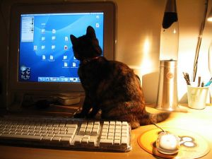 night computer use disturbs sleep and melatonin