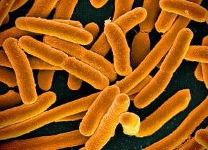 research finds that probiotics and prebiotics decrease blood sugar