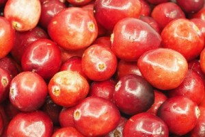 cranberry for probiotic health
