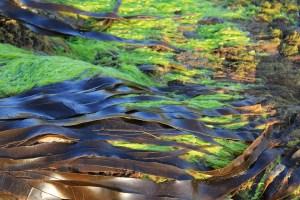 seaweeds balance blood sugar