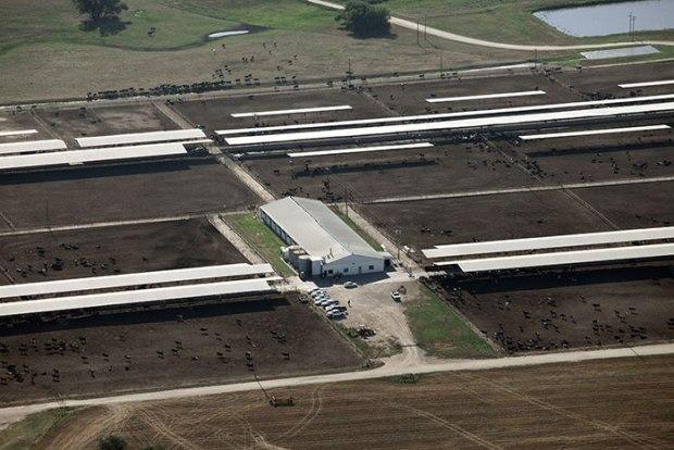 "A certified ""organic"" Aurora dairy facility. Image courtesy of Cornucopia."