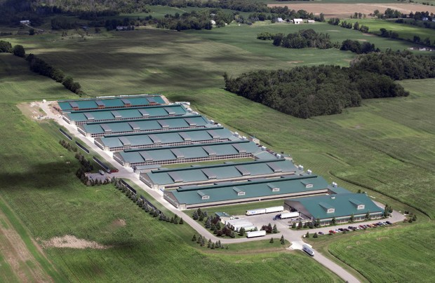 aerial view of egg CAFO