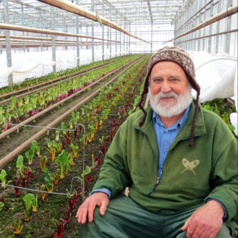Davey Miskell in a winter hat inside his glass house surrounded by colorful, soil-grown chard plants