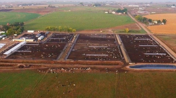 aerial shot of concentrated animal feeding operation dairy where animals cannot possibly make it out to graze grass
