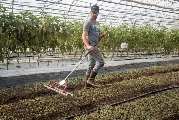 JM Fortier works with hand tools in his market garden