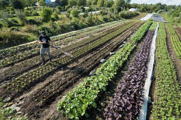 JM Fortier walks the market garden rows at Ferme des Quatre-Temps in Hemmingford Quebec