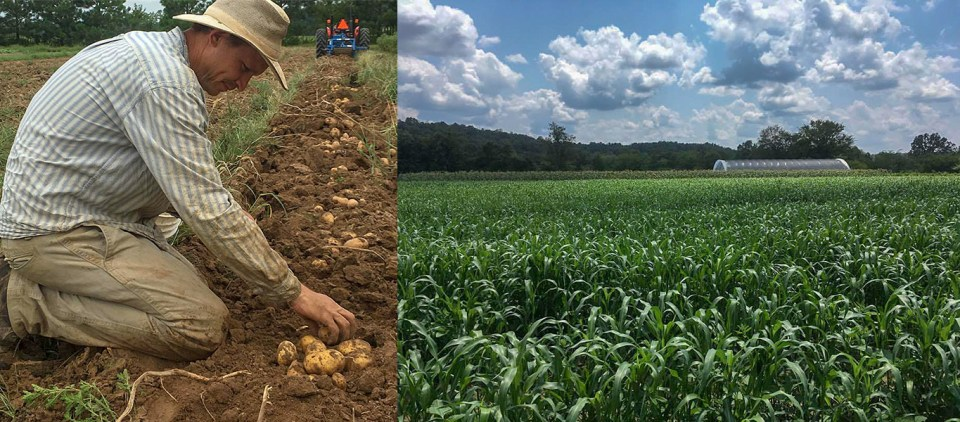 Mike Appel plants potatoes and view of crops at Three Springs Farm Oklahoma