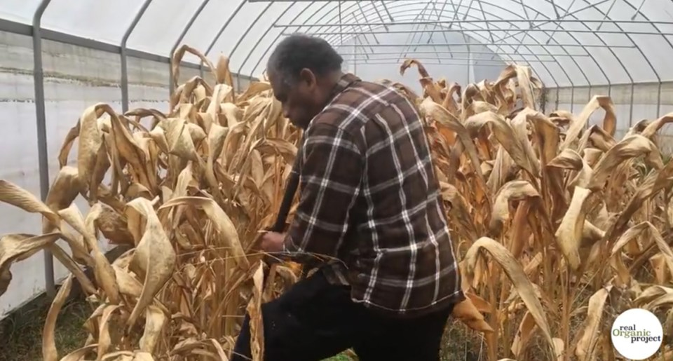 Jesse Buie digs into the soil in his greenhouse