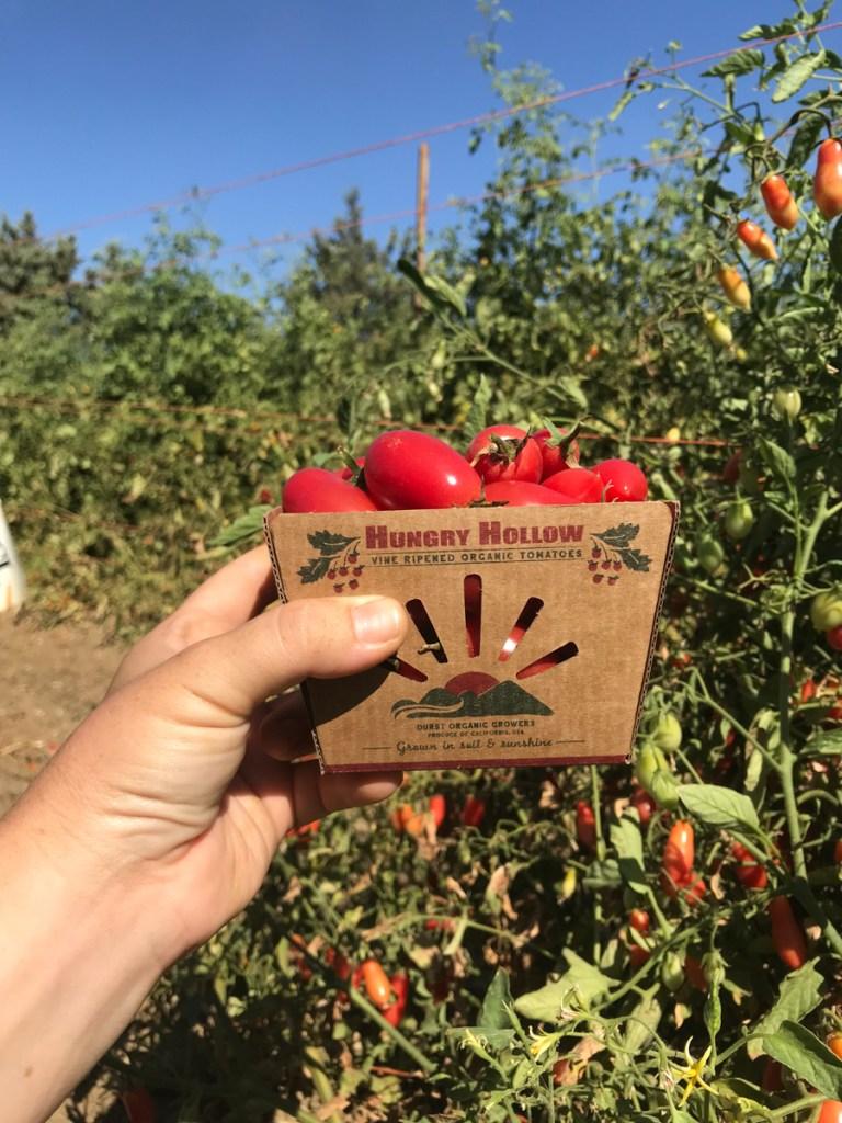 Box of Organic Cherry Tomatoes