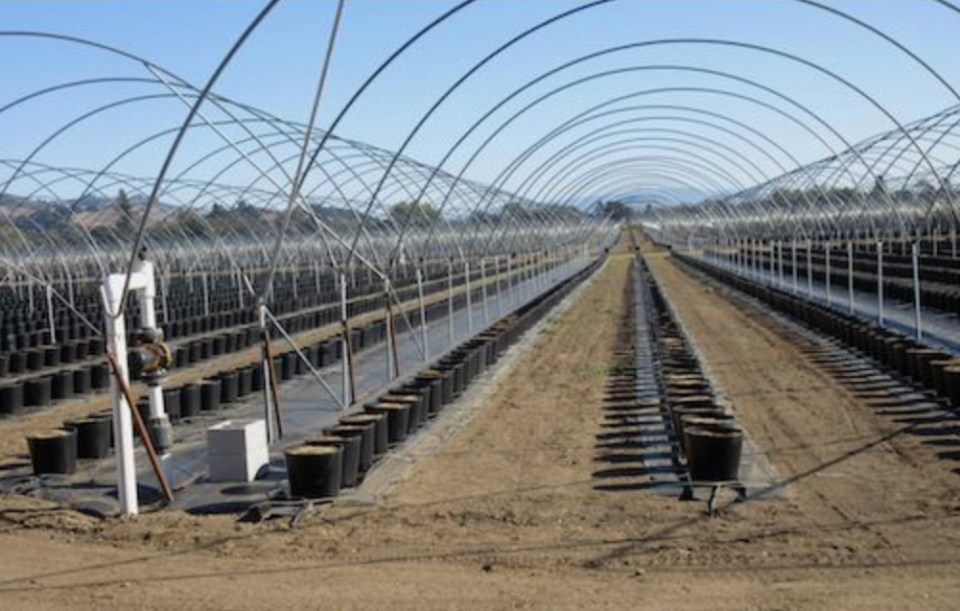 Hydroponic operations are multiplying across the California landscape. A failed system for soil health.