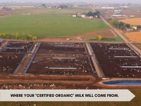 """An areal shot of a confined: """"Where your """"certified organic"""" milk will come from.""""animal feeding operation showing animals fenced in with no green pasture. Text appears on the image reading """""""