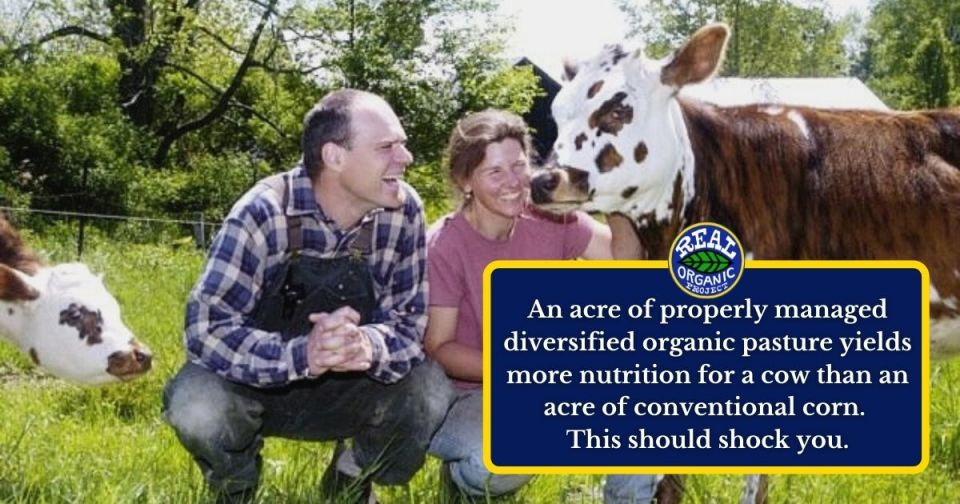 """A man in a plaid blue and white long sleeve shirt and coveralls squats in a pasture next to a woman dressed in a pink tshirt and light blue jeans. Both people are smiling and looking at a brown and white spotted dairy cow the woman is holding. A blue box with yellow outline has text inside that reads """"An acre of properly managed diversified organic pasture yields more nutrition for a cow than an acre of conventional corn. This should shock you."""""""