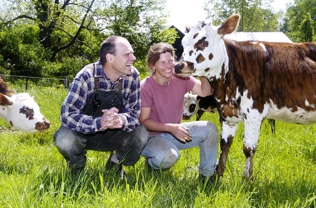 A man in a plaid blue and white long sleeve shirt and coveralls squats in a pasture next to a woman dressed in a pink tshirt and light blue jeans. Both people are smiling and looking at a brown and white spotted dairy cow the woman is holding.