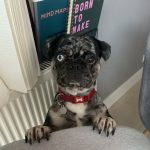 Homeworking With A Pet: 6 Top Tips