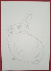 Künstlerin-des-Monats-Tiere-3