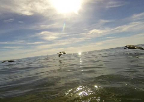Pelicans glide past the peak