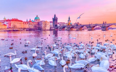 Go to Prague for free… maybe