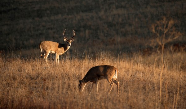 How to Hunt the Phases of the Rut   Deer Hunting ...