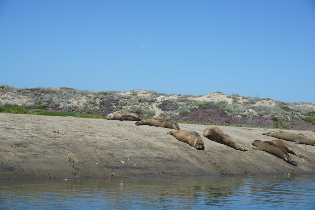 Slough_SeaLions