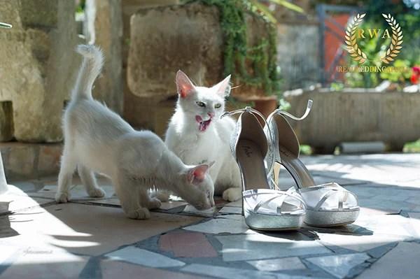matrimonio-pet-wedding-foto