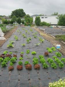 Super-efficient weed control