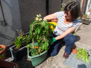 You can grow all sorts in a sheltered spot