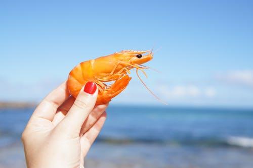 person holding shrimp