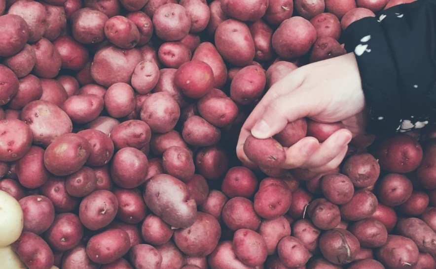 red potatoes for Salad Nicoise being selected by hand