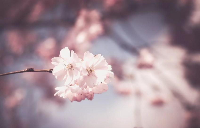 © Pixabay pink-1326168_1920