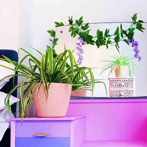 pink hipster pot