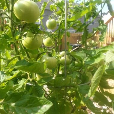 7 Natural Pest Control Methods