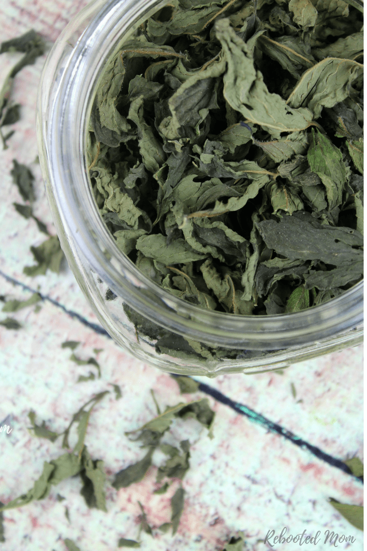 Dry your own fresh mint leaves to use in freshly brewed tea, or infused oil - no dehydrator required! #mint #herbs #tea